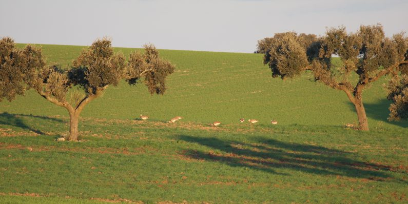 Estudo de Impacte Ambiental da Ligação ferroviária entre Évora e a Fronteira Espanhola