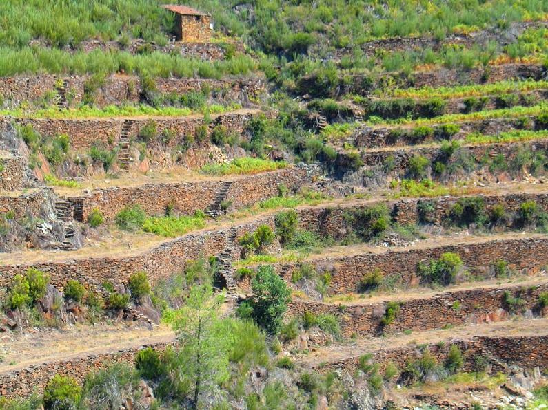 Uma boa parte das paisagens de socalcos de Portugal está actualmente votada ao abandono