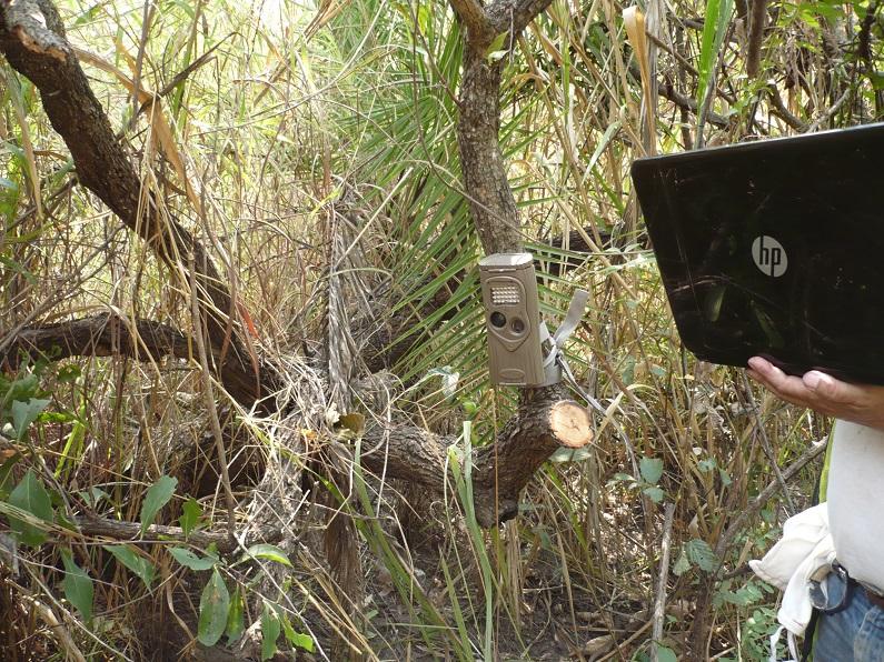 Câmara fotográfica automática instalada para detecção da presença de mamíferos em Angola