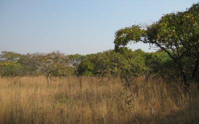 A utilização de câmaras fotográficas automáticas em Angola para detectar a presença de mamíferos…